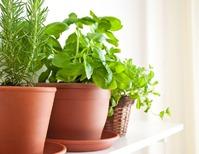 Выращиваем зелень дома в зимний период