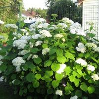 Цветы в июле 2 (дополнение)
