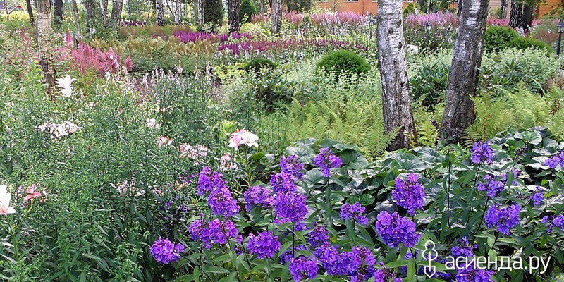 Цветы для городского озеленения
