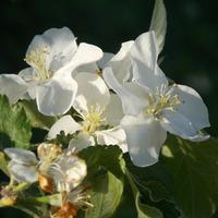 Фото сессия дачных цветов