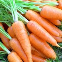 Сохранение зимой урожая моркови