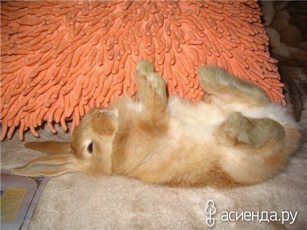 Чем лечить декоративного кролика в домашних условиях