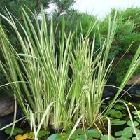 Травы для влажных участков