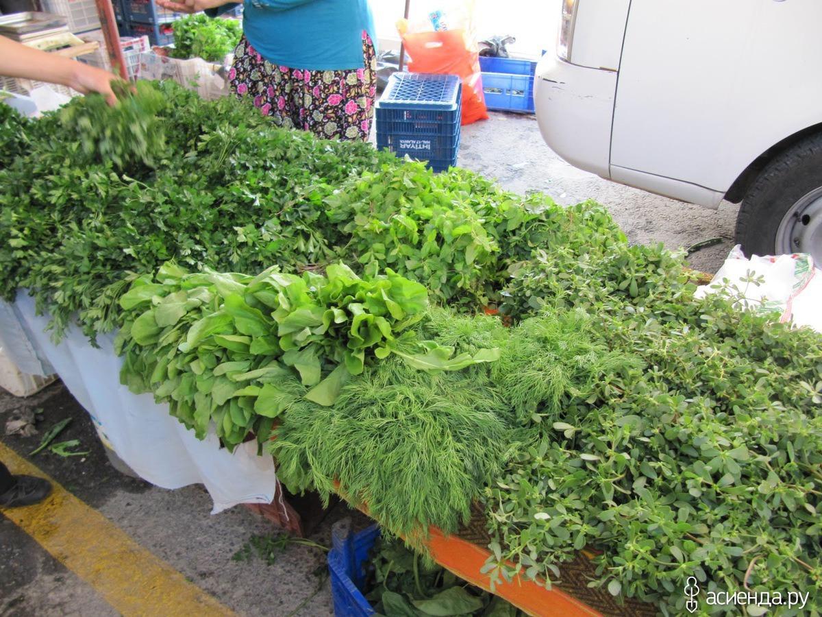 Выращивание укропа в теплице 29