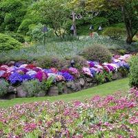 Какие цветы посадить осенью в саду