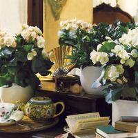 Интересно о комнатных растениях. Часть 2