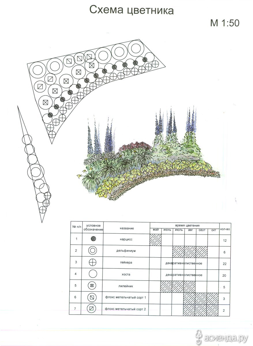 Схемы посадок цветников из многолетников