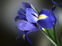 Все о болезнях цветов
