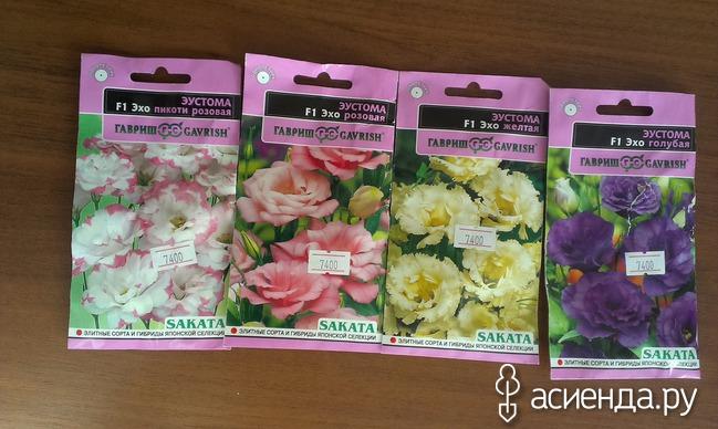 Цветок эустома выращивание из семян в домашних условиях пошагово