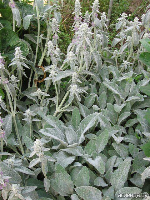 Травы для похудения vasilysergeev
