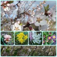 Весна 2015 в моем саду!!!