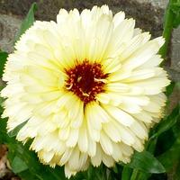 Цветы августа (продолжение)