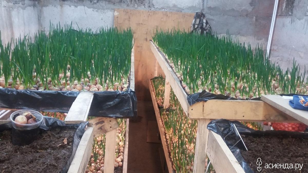 Как вырастить рассаду цветов для дачи 66