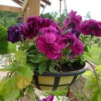 Один раз в год сады цветут!!! А жаль!!!