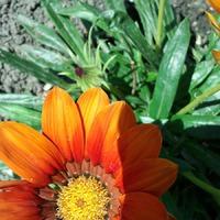 Мой дачный отчет: овощи, цветы, плоды