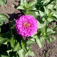 Ну и мои дачные цветочки