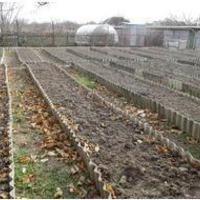 Как повысить плодородие почвы быстро и существенно. (Восстановленный пост).
