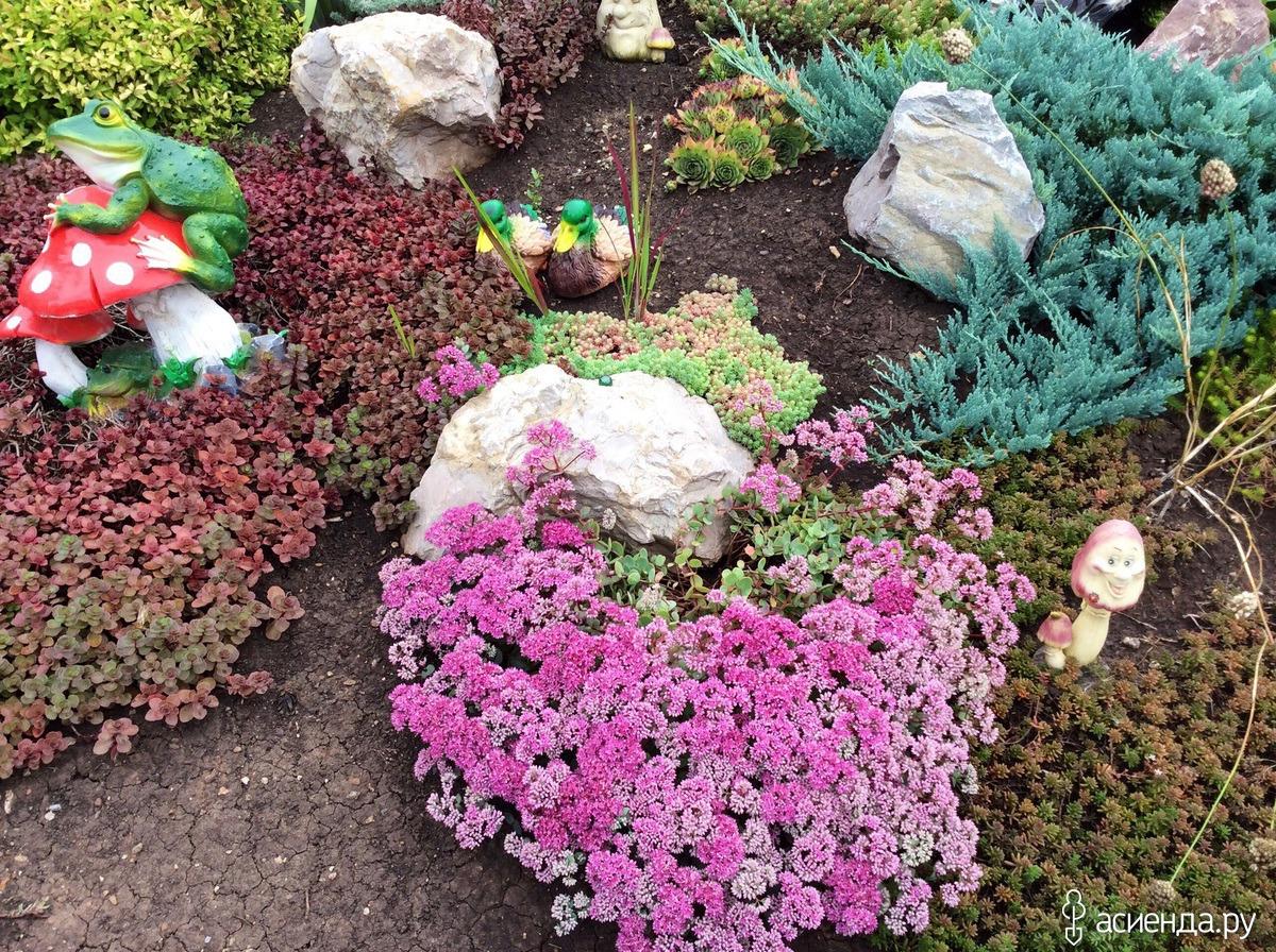 Фото цветов для альпийской горки