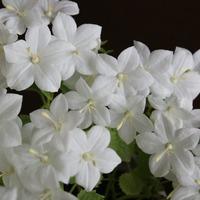 Любимый цветок мужа