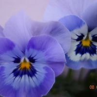 Мои весенние цветы. Часть 2