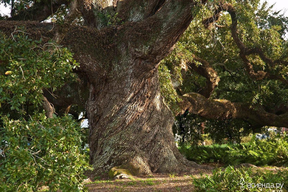 Древесные деревья