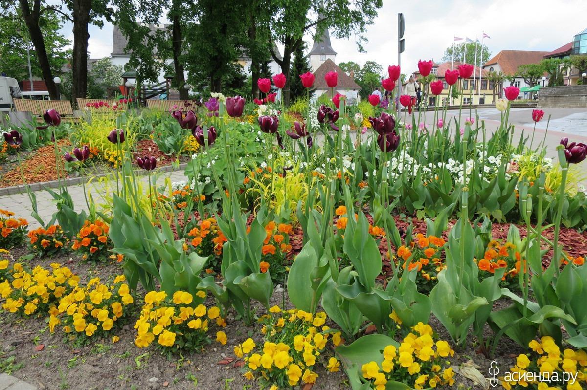 Какие цветы сажать с тюльпанами 918