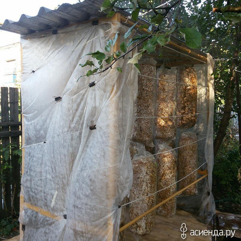 Грибная магия, выращиваем Вешенки на заднем дворе: Группа Наши грядки