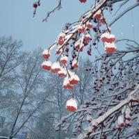 Утреннее умиротворение в снегопад