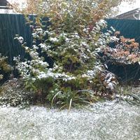 То ли осень, то ли зима