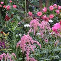 Перья страуса в саду и на клумбе