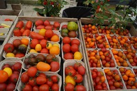 Выставка помидор в Дании.