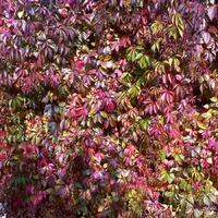 Краски осеннего сада.