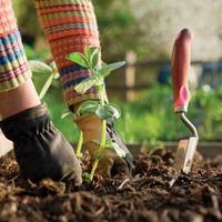 Какие удобрения вносить осенью