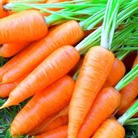 Как правильно хранить морковь. Часть 1