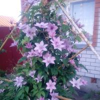 Украшение моего цветника.