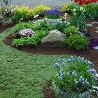 Вечнозеленые и почвопокровные растения