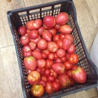 Самый простой рецепт для помидор.