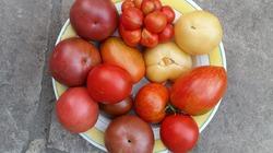 Опять томаты