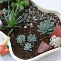 А вы делаете композиции из комнатных растений?