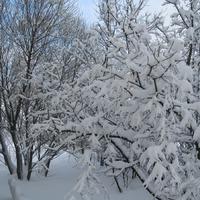 """Зима тоже не """"мёртвый сезон"""" или """"Свой дом украшу я сама""""."""