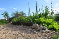 Мой пример клумбы с пряными травами