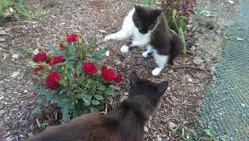 Про котов, цветы, урожай... Но в основном про котов
