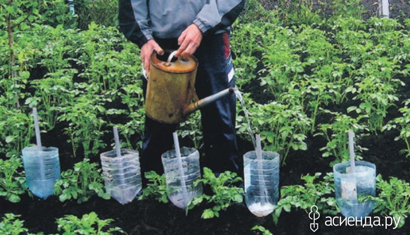 Выращивание томатов в бутылках 726