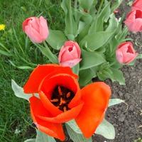 Прогулка по цветущему саду