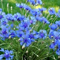 Обилие июньского цветения