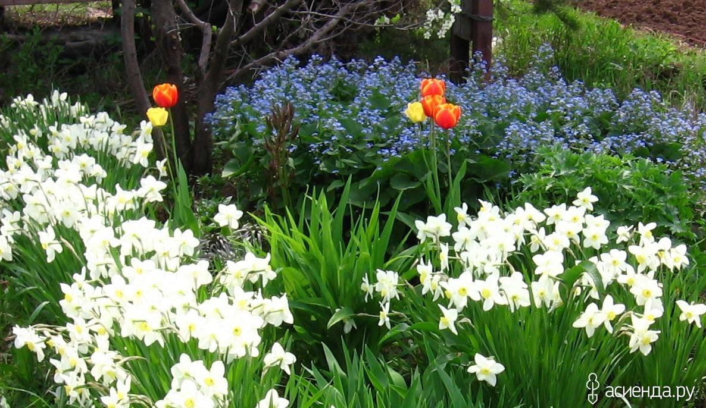 Барвинок цветов рассада когда сажать