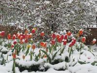 Весна свое взяла!