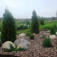 Как вырастить хвойный сад с минимальными затратами.