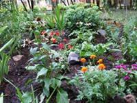 Дача - цветы без проблем