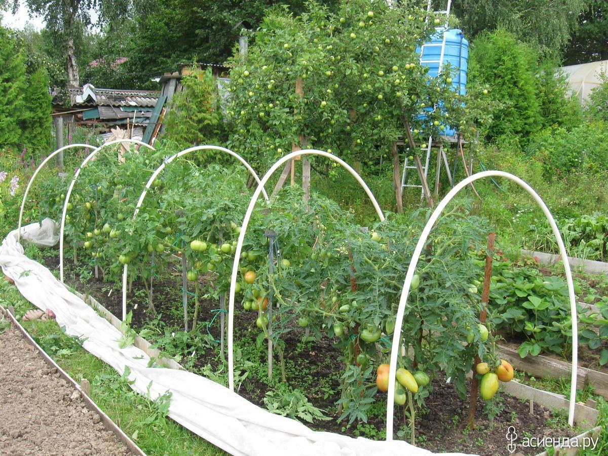 Укрытие помидор : как это сделать, материалы